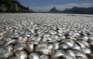 hundreds of dead fish in a bay
